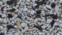 Grys biało-czarnyfrakcja 4-10